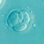不妊治療に欠かせない排卵誘発剤の疑問8つを不妊治療成功ママが解説♪