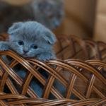 妊婦は猫を飼ってはいけない?妊娠中の猫のトキソプラズマの影響と5つの注意点