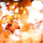 妊婦と秋~妊娠中の秋(9.10,11月)に注意するべき6つのこと