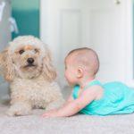 赤ちゃんと犬は一緒に生活して大丈夫?危険性や影響と7つの注意点