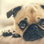 妊娠中に犬のいる家が注意することって?犬を飼っている妊婦さんの7つの対策