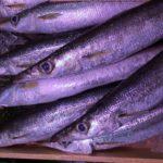 赤ちゃんの離乳食でサンマはいつから食べて大丈夫?3つの注意点とおすすめ秋刀魚レシピ