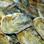 妊婦は牡蠣を食べちゃダメ?3つの注意点と牡蠣による赤ちゃんへの影響