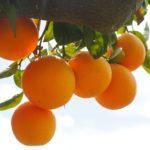 妊婦はオレンジを食べても大丈夫?妊娠中のオレンジ3つの注意点と影響